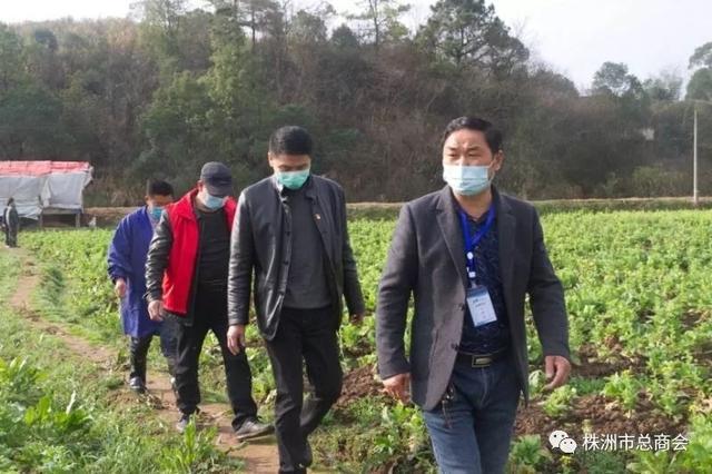 云龙示范区青菜大量滞销 市餐协号召企业采购